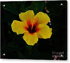 Hibiscus Stand Out  Acrylic Print