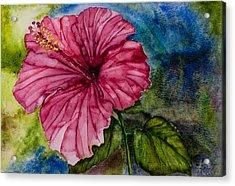 Hibiscus Study Acrylic Print