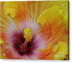 Acrylic Print featuring the photograph Hibiscus by Tam Ryan