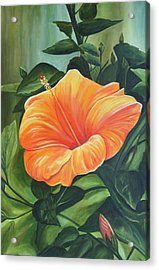 Hibiscus - Tangerine Acrylic Print by Lyndsey Hatchwell