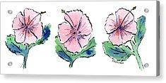 Hibiscus Trio Acrylic Print