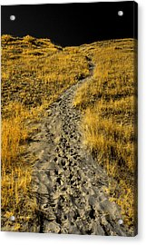Hidden Beach Dune Path Acrylic Print