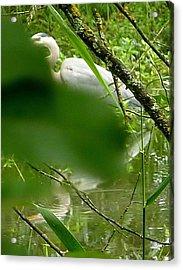 Acrylic Print featuring the photograph Hidden Bird White by Susan Garren