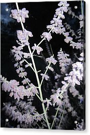 Hidden In Plain View Acrylic Print by Mike Podhorzer