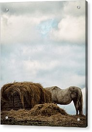 Hidden Acrylic Print by Kimberly Danner