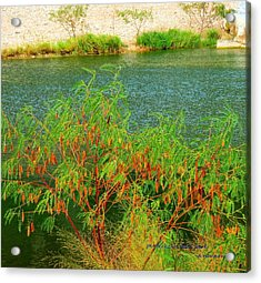 Hidden Oasis Acrylic Print by David  Norman