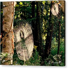 Acrylic Print featuring the photograph Hidden Secrets by Gregory Israelson