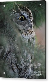 Hidden Acrylic Print by Sharon Elliott