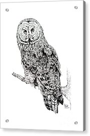 Hidden Wisdom Acrylic Print