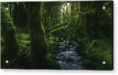 Hidden Wood Acrylic Print