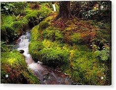 Hidden Woodland Corner. Benmore Botanical Garden. Scotland Acrylic Print by Jenny Rainbow