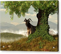 Hide And Goat Seek Acrylic Print