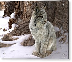 Hide And Seek Acrylic Print by Bill Stephens