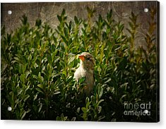 Acrylic Print featuring the photograph Hide And Seek by Mariola Bitner