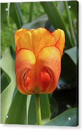 Hide-n-seek Tulip Acrylic Print
