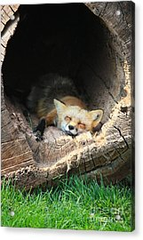 Hideout Acrylic Print by Veronica Batterson