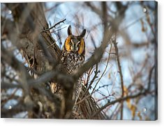 Hiding 2 Acrylic Print by Leland D Howard
