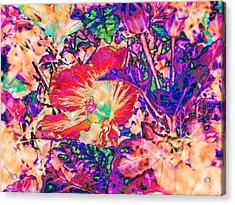 Hiding Hibiscus Acrylic Print