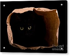 Hiding In The Paper Bag Acrylic Print