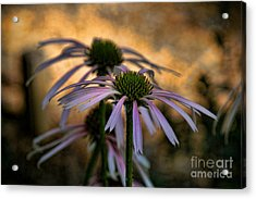 Acrylic Print featuring the photograph Hiding In The Shadows by Peggy Hughes