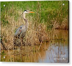 Hiding In The Weeds Acrylic Print