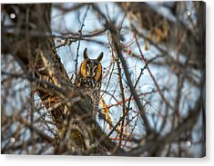 Hiding Acrylic Print by Leland D Howard
