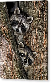 Acrylic Print featuring the photograph Hiding Out by David Stine