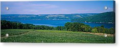 High Angle View Of A Vineyard Acrylic Print by Panoramic Images