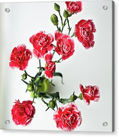 High Angle View Of Red Carnations Acrylic Print by Kateryna Kyslyak / Eyeem