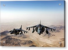 High Desert Harriers Acrylic Print by Peter Chilelli