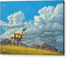 High Meadow - Pronghorn Acrylic Print by Paul Krapf