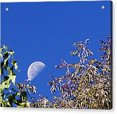 High Moon Acrylic Print