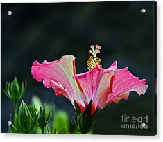 High Speed Hibiscus Flower Acrylic Print