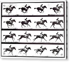 High-speed Sequence Of A Galloping Horse And Rider Acrylic Print by Eadweard Muybridge Collection/ Kingston Museum/science Photo Library