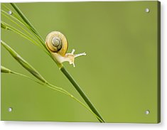 High Speed Snail Acrylic Print