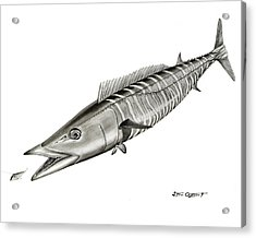 Acrylic Print featuring the drawing High Speed Wahoo by Steve Ozment