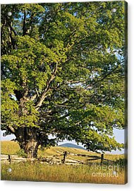 Acrylic Print featuring the photograph High Summer by Alan L Graham