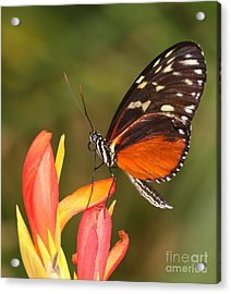 High Upon A Flower Acrylic Print by Ruth Jolly
