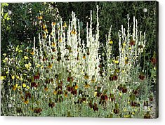 High Wattage Planting. Acrylic Print by James Rabiolo