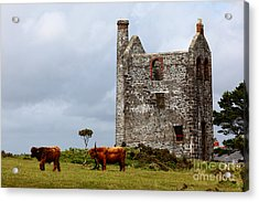Highland Cattle And Ruined Tin Mine  Acrylic Print by James Brunker