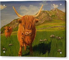Highland Coos Acrylic Print by Kelly Bossidy