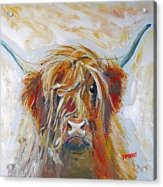 Highland Cow Acrylic Print
