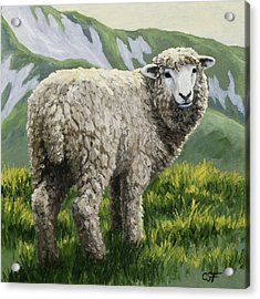 Highland Ewe Acrylic Print by Crista Forest