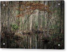 Highland Hammocks State Park Florida    Acrylic Print