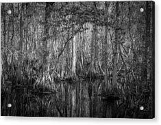 Highland Hammocks State Park Florida Bw Acrylic Print