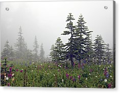 Hiking In The Clouds Acrylic Print