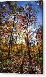 Hiking Trail In Sunny Fall Forest Acrylic Print by Elena Elisseeva
