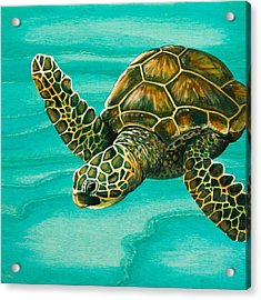 Hilahila Shy Sea Turtle Acrylic Print by Emily Brantley