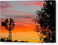 Hill Country Colors Acrylic Print by David  Norman