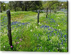 Hill Country Wildflowers Acrylic Print by Cathy Alba
